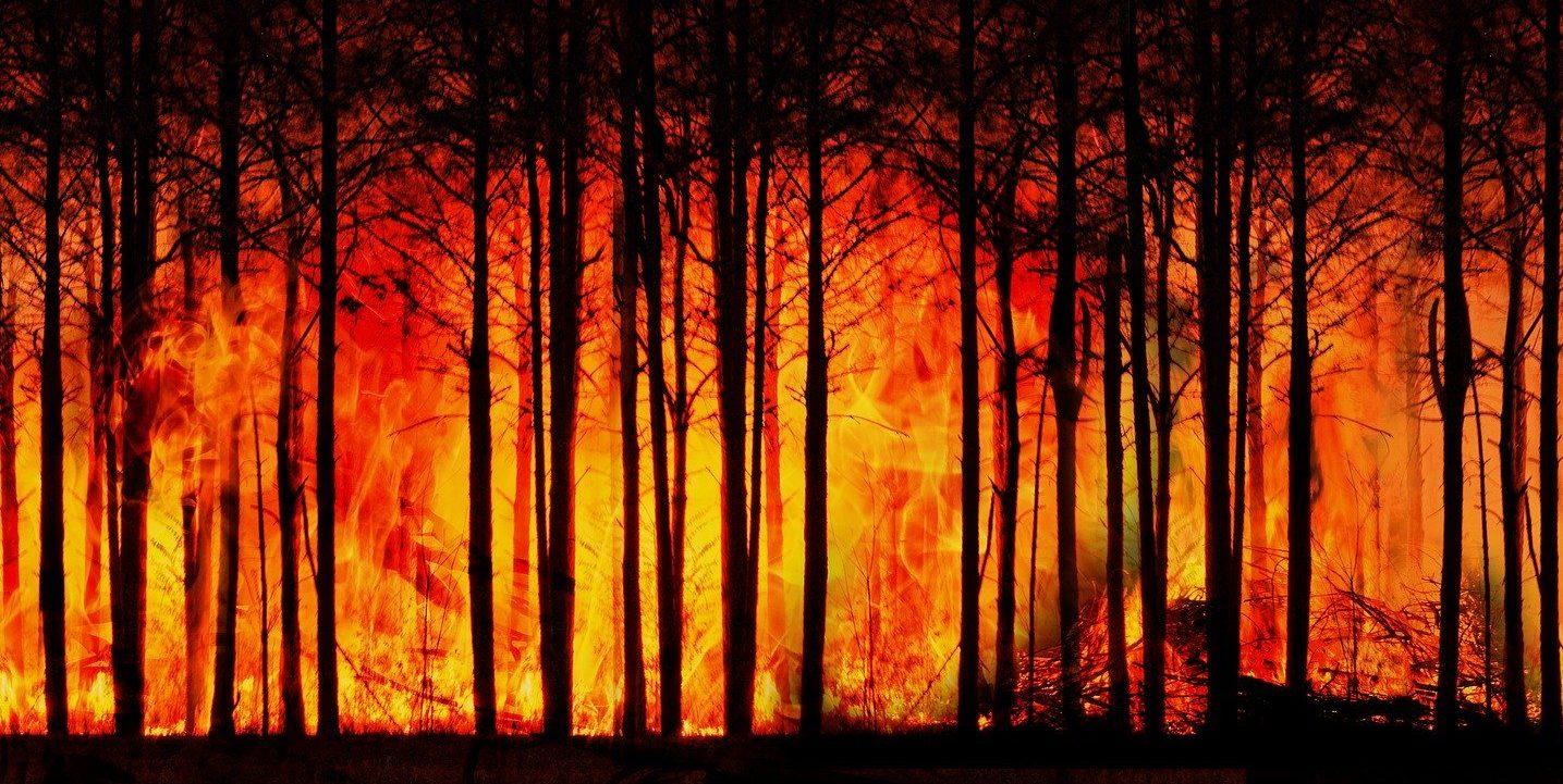 foresta fuoco